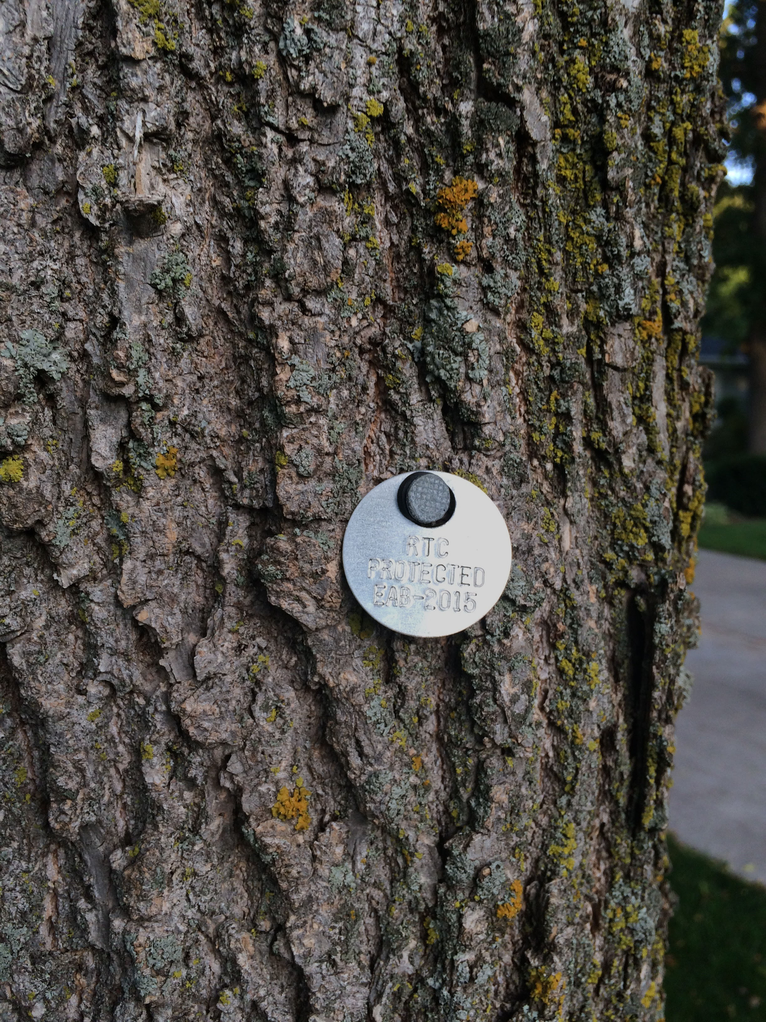 Metal tags identify ash trees protected from EAB.