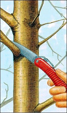 USDA tree prune